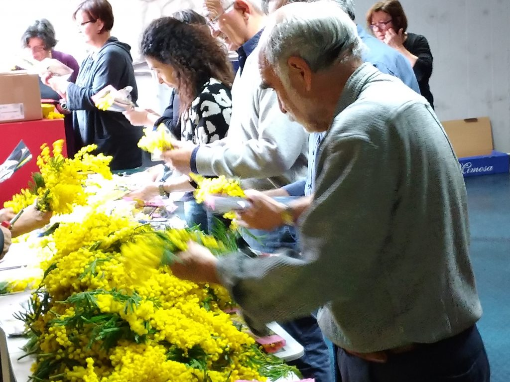 confezionamento mimose 8.3.19