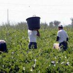 agricoltura caporalato Romagna